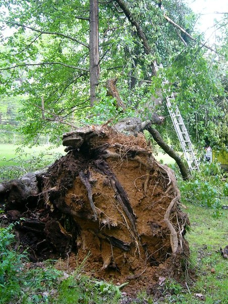 TreeDownCopy (2)